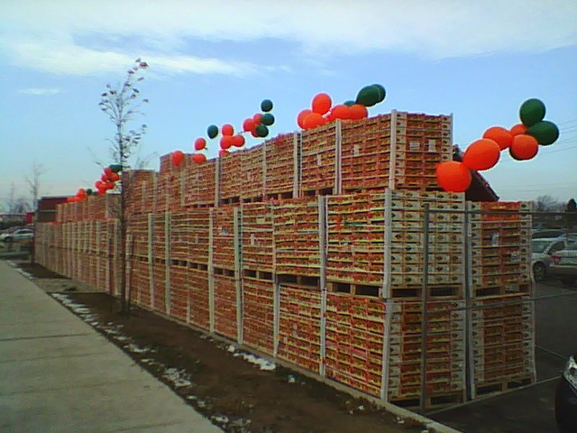 Picture of some of 1,344,000 clementines